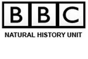 BBC-icon 2
